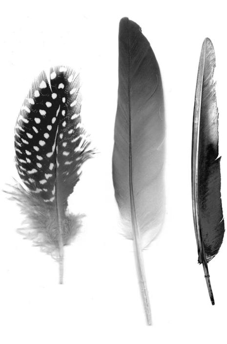 Feathers-Pattern-Development-feathers