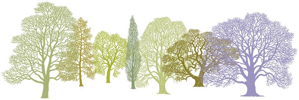 Trees Pattern Design Woodland